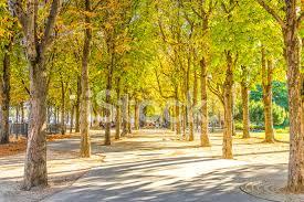 Park I Champs Élysées, Paris Stockfoton - FreeImages.com
